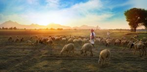 This is a photo of people heading sheep.  The LORD is my shepherd, I shall not want. He makes me lie down in green pastures.